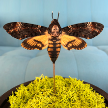 Load image into Gallery viewer, Death's-head Hawkmoth