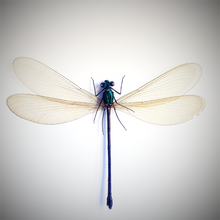 Load image into Gallery viewer, Teal Damselfly
