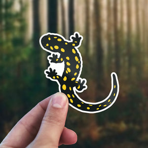 spotted salamander sticker in environment