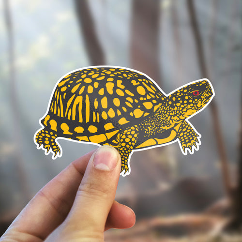 Eastern Box Turtle Stickers