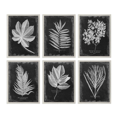 Uttermost Foliage Prints Set Of Six - K&R Interiors