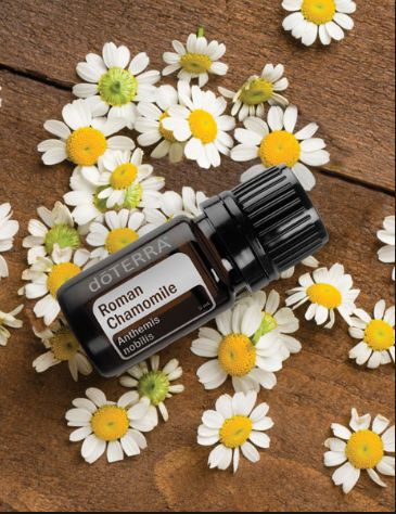 Peaceful Atmosphere with dōTERRA Roman Chamomile