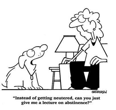 More Funny Dog Cartoons