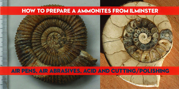 Preparation of ammonites from the  'Junction Bed' of  Ilminster, Somerset - ZOIC PalaeoTech