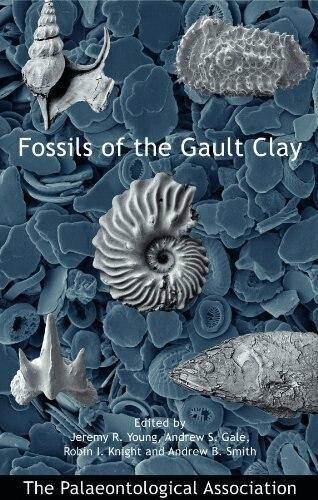 Fossils of the Gault Clay fossil hunting book