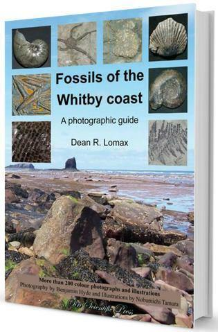 Fossils of the Whitby Coast: A Photographic Guide yorkshire coast fossil hunting collecting ID