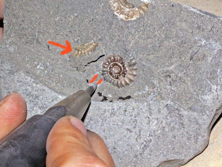Using an air pen to expose the outer whorls of an ammonite zoic t rex in action air scribe fossil preparation