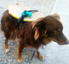 Dog best way to transport your Slyde Handboard