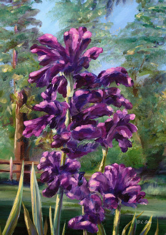 Blooming Irises Image 1