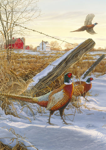 Pleasant Pheasants Image 1