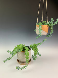 pottery planters with succulents. one hanging planter, one planter with attached drainage tray. thrwon with red clay and and glazed in speckled white