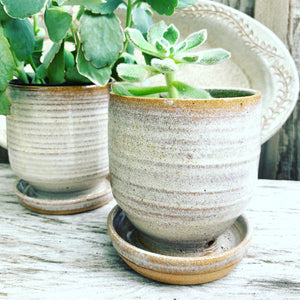 pottery planter with succulent