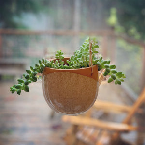 Pottery hanging planter, hanging in window, planted with a succulent which hangs over the edges.