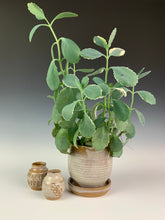 Load image into Gallery viewer, pottery planter shown with two mini bud vases in white glaze