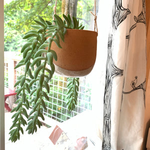 Pottery planter hanging in window. burrows tail plant trailing down from planter