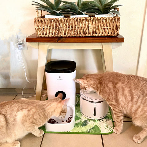 Automatic Feeder and Fountain