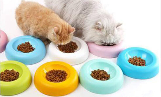 Cat Feeding Tips