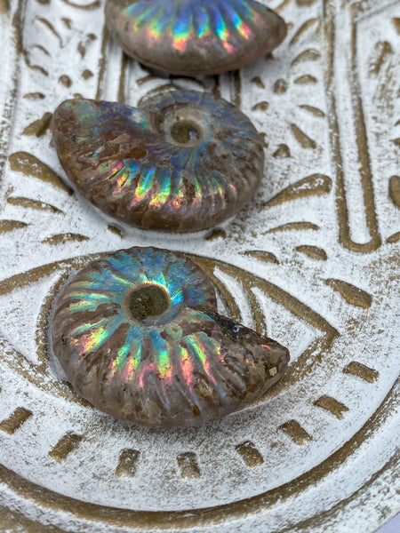 Ammonite Opal Fossil | Medium