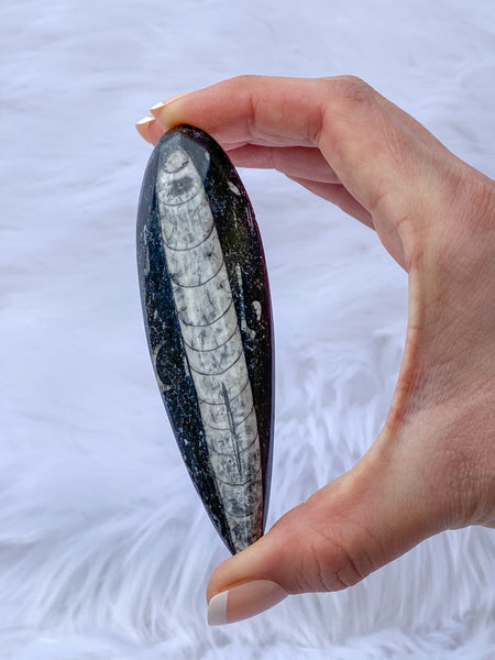 Orthoceras Fossil 69g