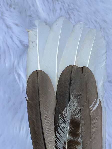 Ceremonial Feather Fan