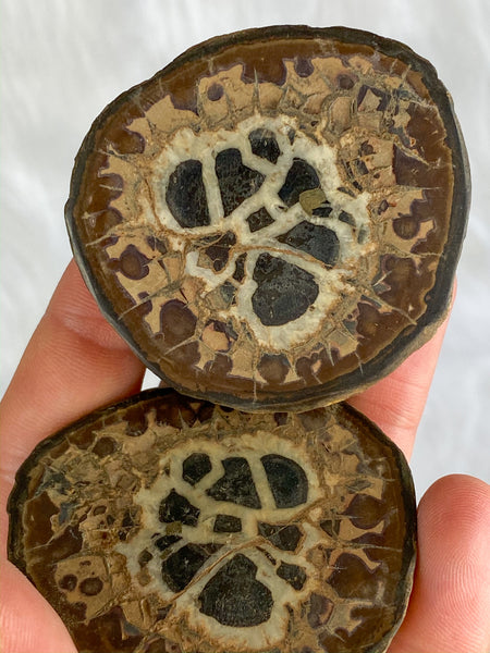 Septarian Natural Pairs Butterfly | Medium 172g