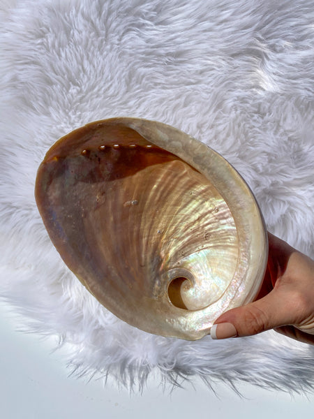 Abalone Shell Natural Extra Large
