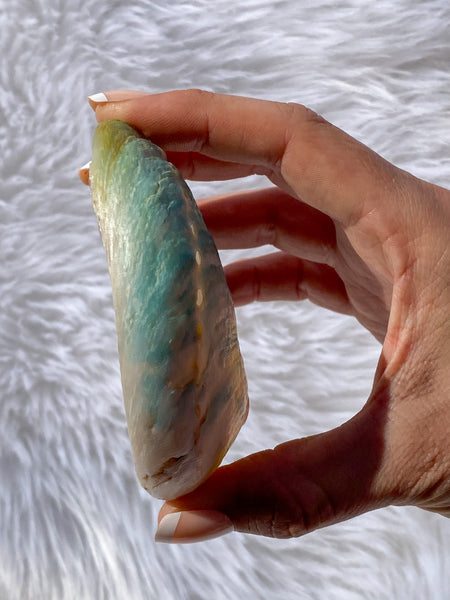 Abalone Shell Natural | Small