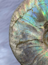 Load image into Gallery viewer, Ammonite Opal Fossil 186g