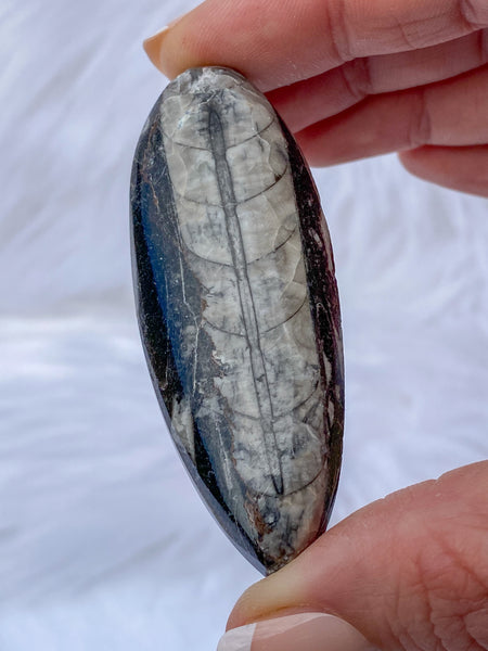 Orthoceras Fossil 28g