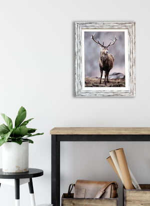Winter Stag Framed Print