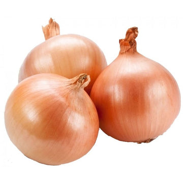 Onion - Brown (1)