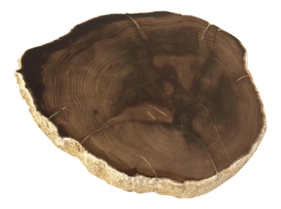 Polished Petrified Wood Slice