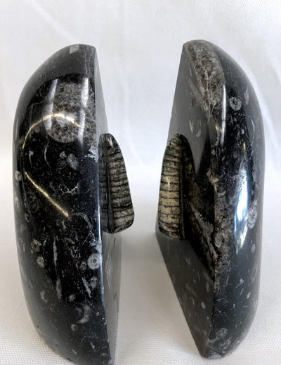 Pair Trilobite Fossil & Black Granite Bookends