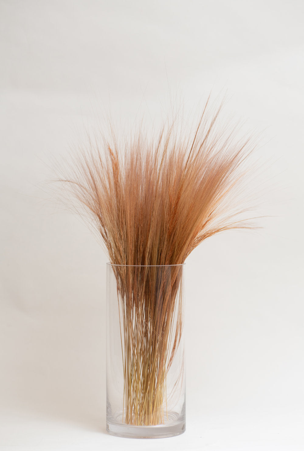 Dried Rainbow Rust Grass in Glass Vase