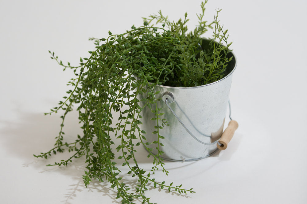 Trailing Greenery Bush in Tin Bucket