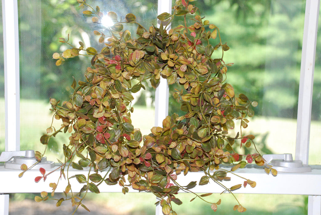 Bog Pimpernel Wreath/Candle Ring - Mix of Fall
