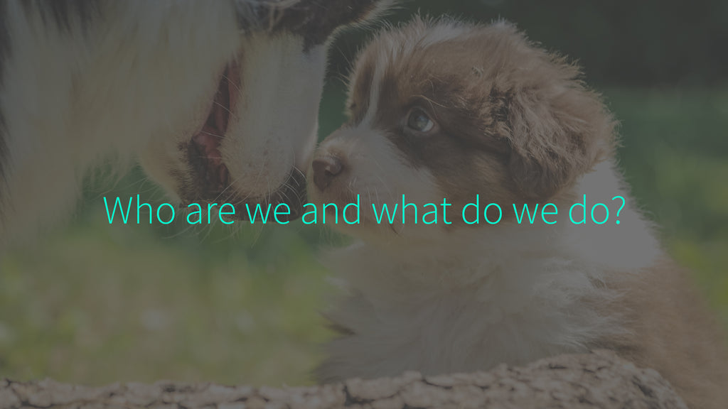 About Us Who Are We What Do We Do Cute Happy Dogs Dog Collection Store