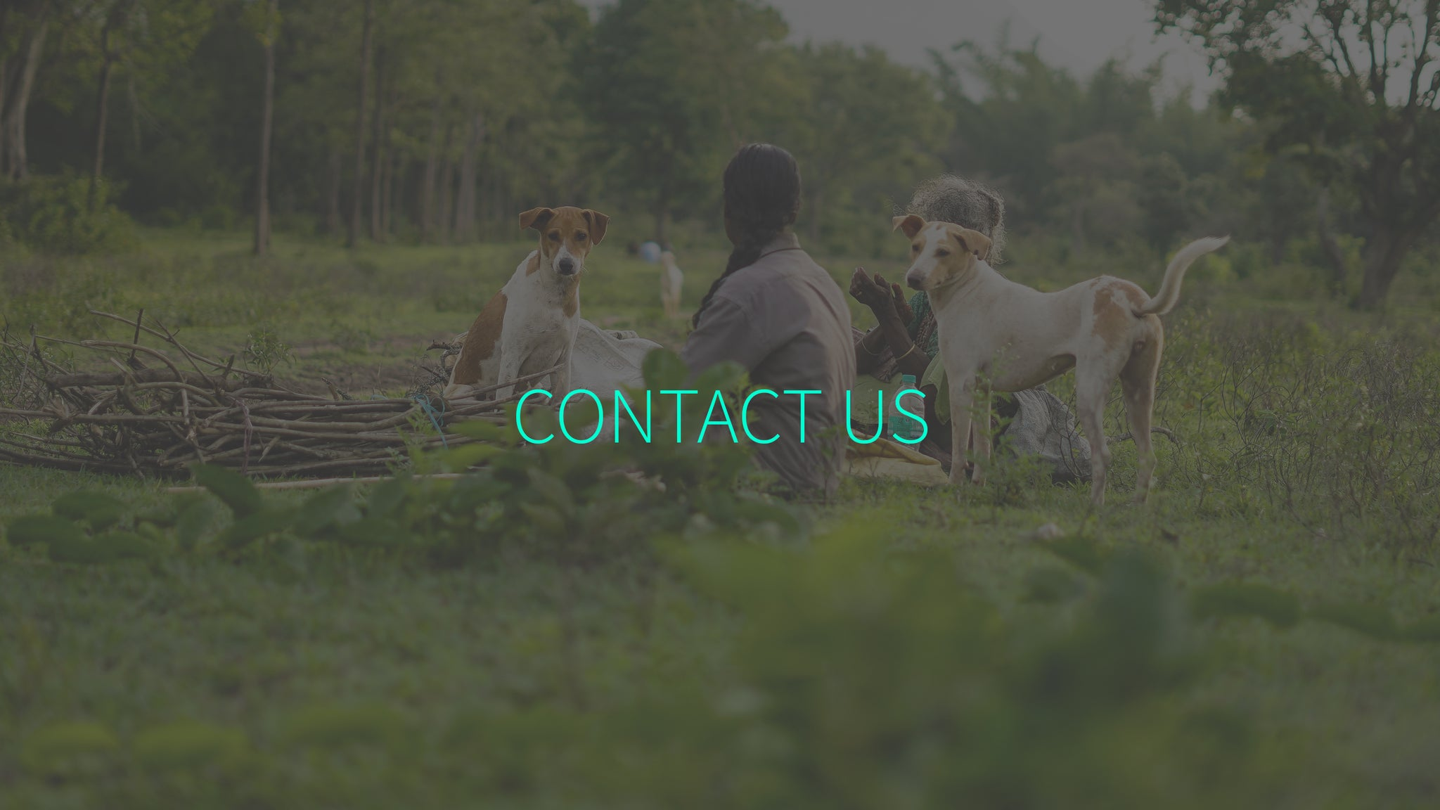 Cute Happy Dogs Contact Us Dog Collection Store Faith Trust Relationship