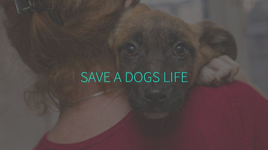 Save a Dogs Life
