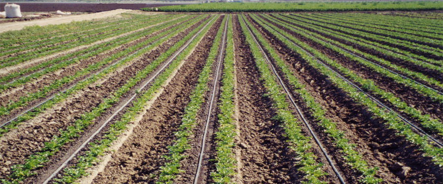 Drip irrigation for farms