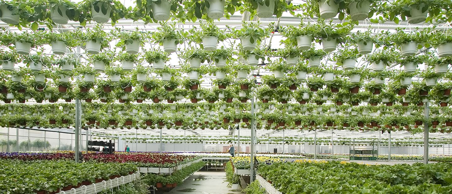 Netafim Greenhouse Irrigation