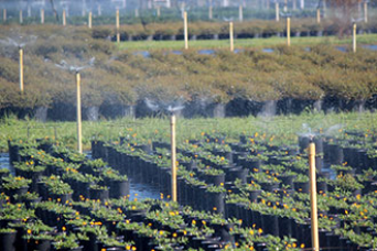 tree farm irrigation