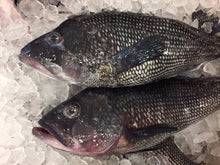 Load image into Gallery viewer, Locally Sourced NJ Black Bass Fillet