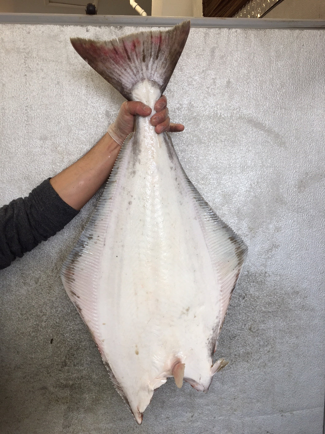 Halibut - Wild Caught Product of Canada