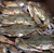 Soft Shells Crabs Home Delivery