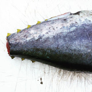 Wild Caught Grilling Tuna