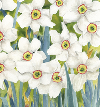 Load image into Gallery viewer, Flower Prints