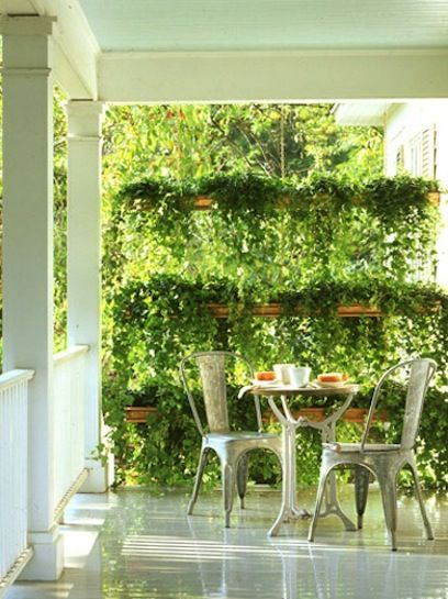 designer outdoor chairs and plants