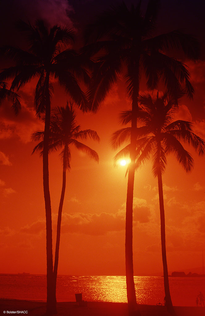 Red Tropical Sunset • Warren Bolster Collection