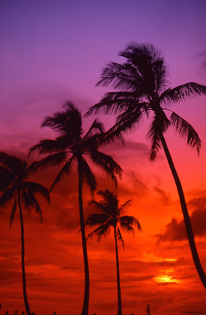 Purple Tropical Sunset • Warren Bolster Collection
